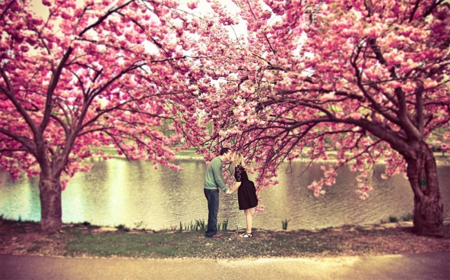 trees-kiss-under-a-cherry-blossom-tree